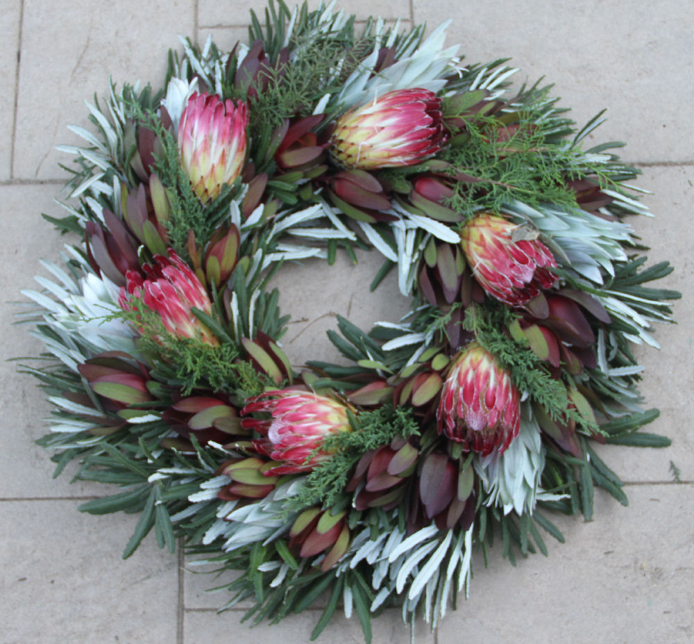 INTEGRIFOLIA, CYPRESS & FLAME WREATH