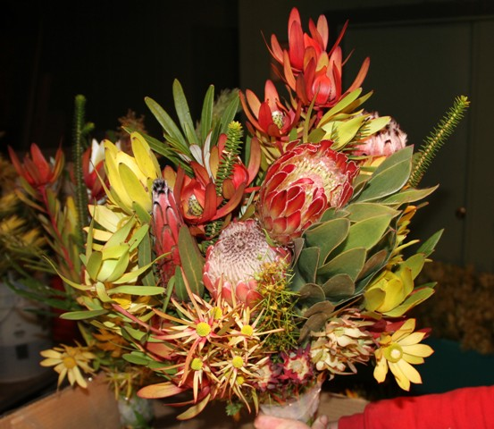 FRESH PROTEA BUNCH - Seasonal variety