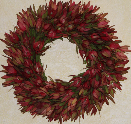 FRESH RED SAFARI SUNSET LEUCADENDRON WREATH