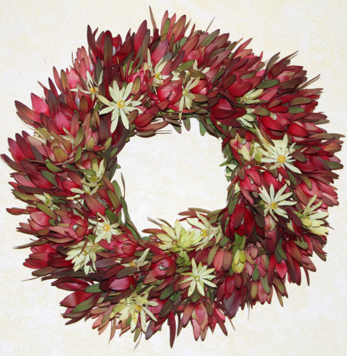 FRESH LEUCADENDRON PROTEA WREATH RED WITH STARS