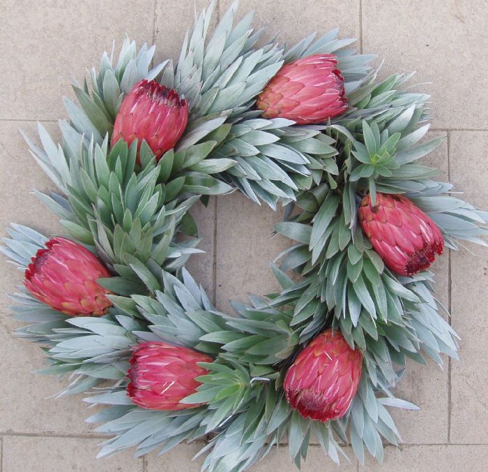 FRESH PINK & SILVER PROTEA WREATH